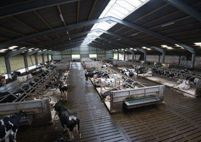 Moody-Cow-Visit15