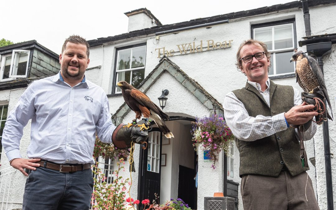Falcons to Fly with Guests in Wild Boar Woods